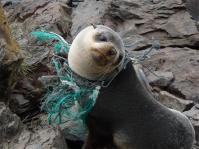 balloon seal